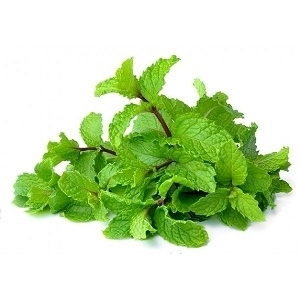 Picture of Mint (pudina)  1 nos